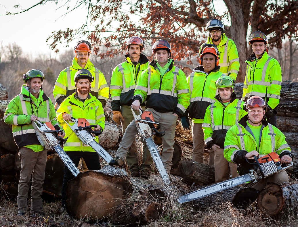 arbor pro tree care team