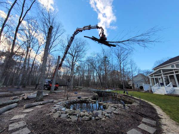 Remote Control Tree Removal